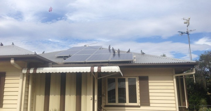 Solar clean and bird proofing in Ipswich